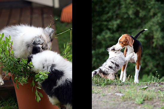 Puppies 2009